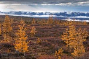 Eagle Plains am Polarkreis entlang vom Dempster Highway Fotoreisen Indian Summer Herbst mit Richardson Mountains im Hintergrund