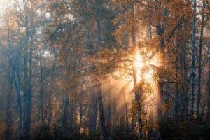 Indian Summer Fotoworkshop mit Profifotograf Lichtstimmungen durch goldig gelbe Laubwälder im Gegenlicht eingefangen