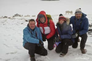 Kleingruppe vor wilder Dallschafgruppe im Kluane National Park auf Foto- und Winterreise ganz nahe an den Tieren