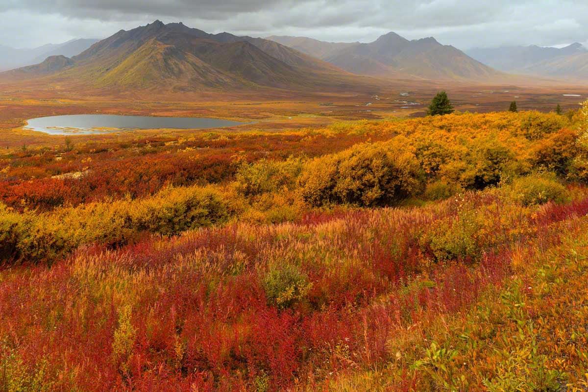 Indian Summer zum Polarkreis - Glanzmann Tours Yukon Canada