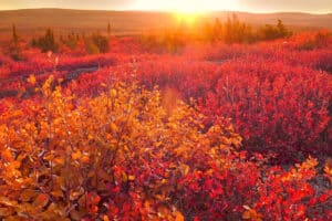 Herbstfarbige Tundra am Dempster Highway Polarkreis Arctic circle im September Indian Summer Fototouren im Yukon