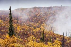 Am Top of the World Highway unterwegs mit Kleinbus durch Herbstfarben Landschaften Tundra und Taiga Nordlandreisen