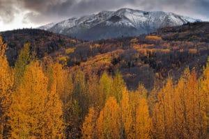 Indian Summer Haines Road Yukon Alaska Wandern Herbstreisen im hohen Norden