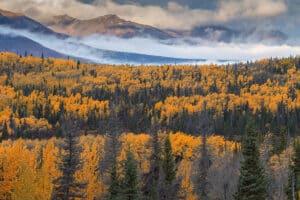 Indian Summer Fotografie Landschaften im Herbst in Alaska und Yukon wandern