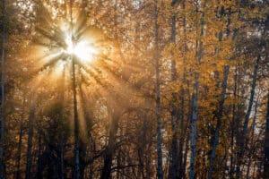 Landschaftsfotografie mit Fotograf unterwegs auf Indian Summer Reisen, Lichtstimmung im Herbstwald