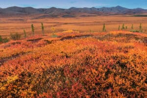 Tundra Landschaft fotografiert in den Richardson Mountain am Dempster Highway Indian Summer am Polarkreis im Norden Kanadas