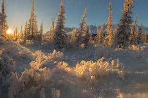 Brillantes Winterlandschaftsfoto aus der weiten, stillen Yukon Wildnis vom Profifotograf Beat Glanzmann