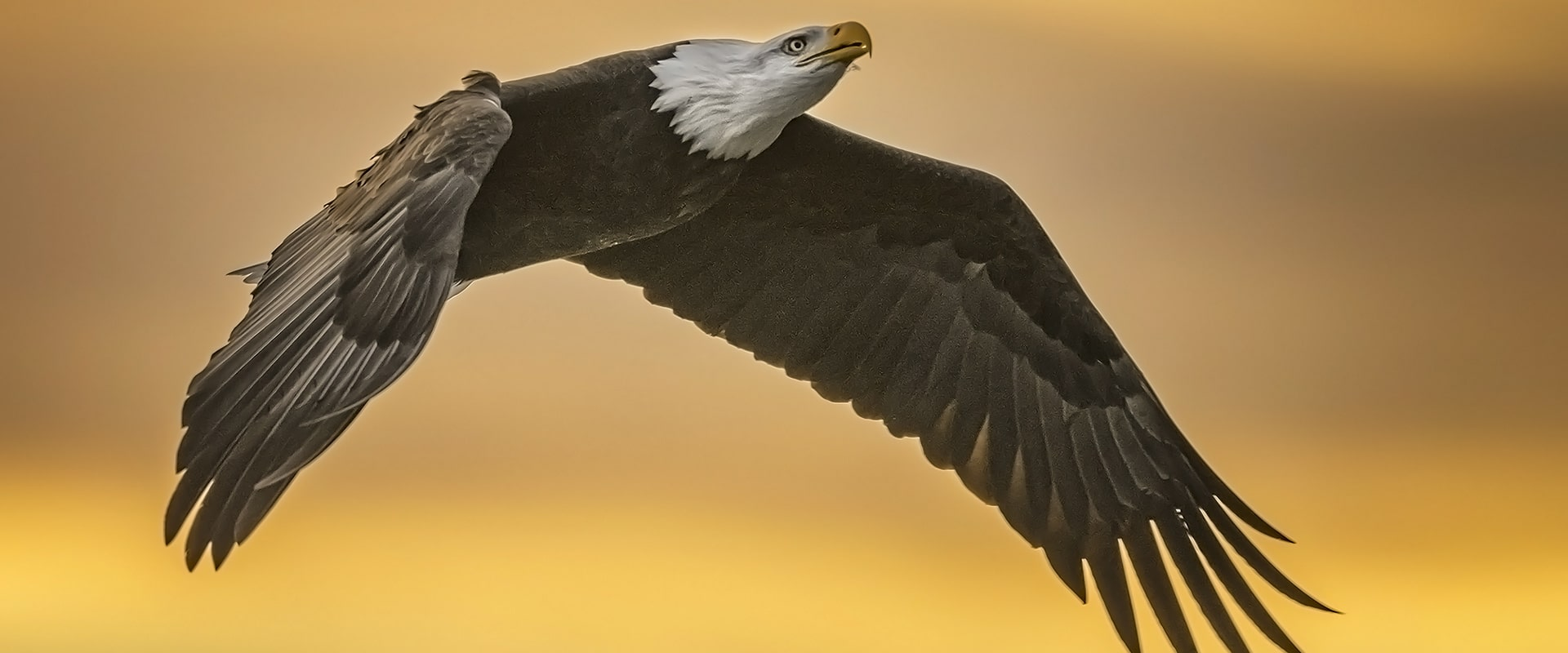 Bald Eagle Photography Tour – 7 days